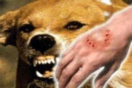 Пока бешенство давно «разгуливает» по Улан-Удэ, диких зверей, наконец, начнут вакцинировать