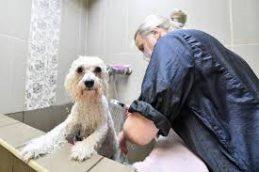 Собаки с прогулки могут принести в дом коронавирус, предупреждает эксперт