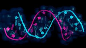 Немецкие ученые описали экспрессионные панели микроРНК в сперматозоидах и семенной плазме фертильных мужчин и в ткани яичка мужчин с обструктивной азооспермией