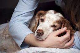 Заразность собачьей чумки для человека