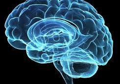 На рынке может появиться новое средство против болезней мозга