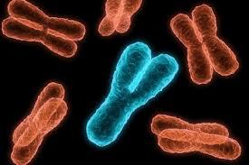 Генетики пролили свет на роль Y-хромосомы