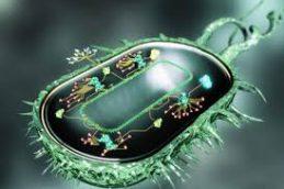 Ученые: бактерии больше не боятся ваты со спиртом