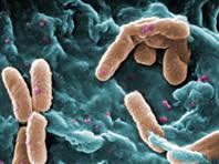 Эксперты призывают пересмотреть отношение к терапии опасной легочной инфекции