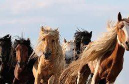 Лошади подарят новое лекарство против COVID-19