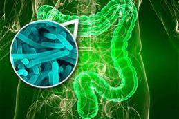 Ученые выяснили, что кишечные бактерии помогают бороться с гриппом