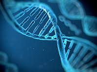 Исследователи узнали, какие гены приводят к циррозу печени