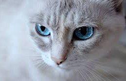 Китайские ученые нашли коронавирус у кошек