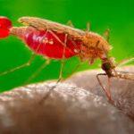 Сальвадор первым в Центральной Америке смог избавиться от малярии