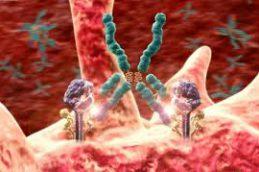Аутоиммунные заболевания, инициированные антителами или Т-клетками
