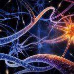 Ученые сделали доставку лекарств прямо в нервную систему возможной