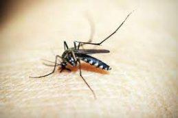 В РФ создан первый ПЦР-тест для диагностики малярии