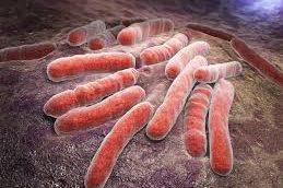 Ученые открыли путь для разработки новых антибиотиков против туберкулеза