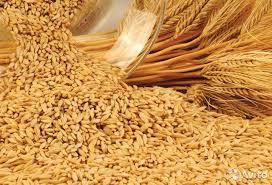 Очищенное зерно оказалось опасным для сердечно-сосудистой системы