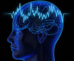 Ученые открыли гормон, ускоряющий работу мозга