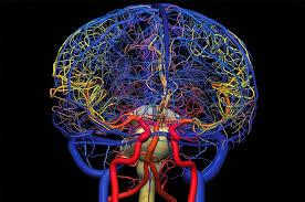 Гадолиний может задерживаться в мозге после контрастирования
