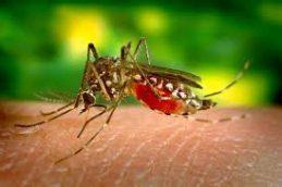 Получать средство для борьбы с малярией стало намного проще