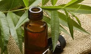 Экстракт чайного дерева спасает от инфекции