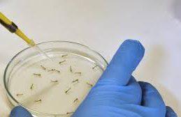 Ученые рассказали о новых проблемах диагностики вируса Зика
