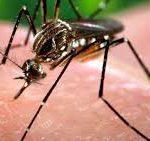 Вакцина против лихорадки денге успешно прошла КИ
