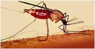 В Малави начнут использовать первую вакцину против малярии