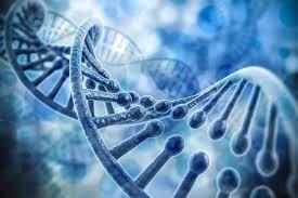 Китайцы использовали редактирование генома для получения неуязвимых животных