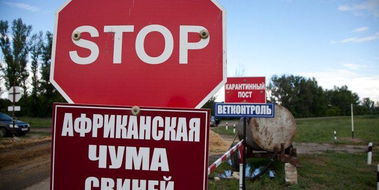Вирус африканской чумы зафиксирован в Челябинской области