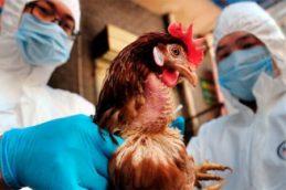 Проблема распространения вируса птичьего гриппа обостряется летом