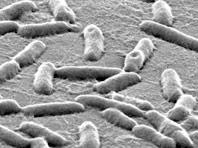 Металл — новое секретное оружие против супербактерий