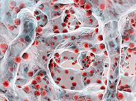 Исследователи готовы к прорыву в борьбе с устойчивыми бактериями