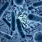 Российские ученые проверяют эффективность уникальных пробиотиков