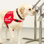 Поиск опасных легочных инфекций на себя возьмут собаки