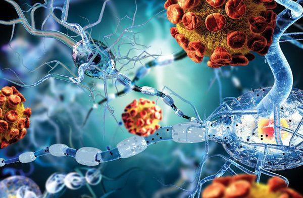 Как иммунная система становится »слепой» к раковым клеткам
