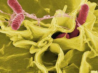 В приморской больнице саннарушения привели к вспышке сальмонеллеза