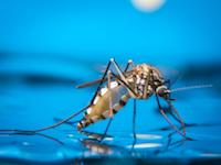 За 15 лет смертность от малярии в Африке упала на 66%