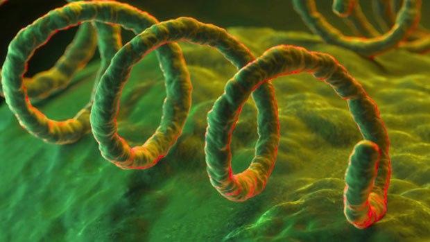 Характеристика возбудителя (носителя) вируса сифилиса; что вызывает?