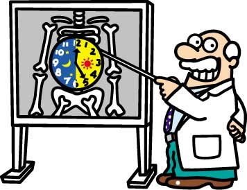 Биологические часы влияют на иммунитет
