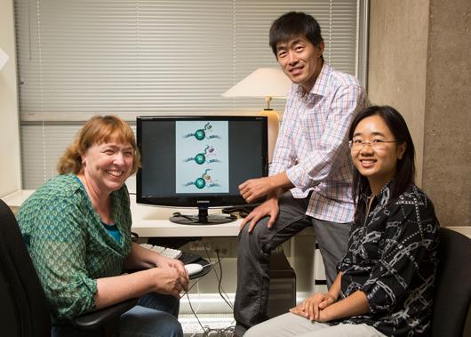 Ученые смогли найти еще одно уязвимое место у вируса иммунодефицита человека