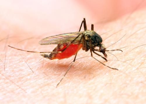 В водоемах Москвы обнаружены личинки комаров, переносящих малярию