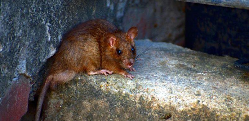 Геморрагическая лихорадка – одна из наиболее актуальных природно-очаговых инфекций в ЕАО