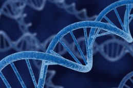 Обнаружено вещество, восстанавливающее повреждения ДНК в клетках
