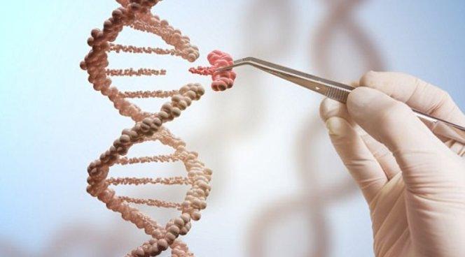 Ученые впервые полностью вылечили животных от ВИЧ