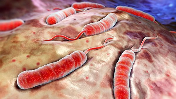 Холеру обнаружили в 100 километрах от Таганрога