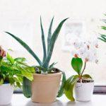 Эксперты составили рейтинг самых полезных для здоровья комнатных растений