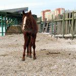Карантин, объявленный в центре Тюмени из-за смертельно больных лошадей, продлится до конца года