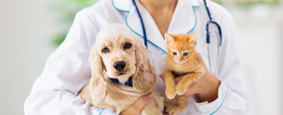 Ветеринарная клиника Восток – огромный перечень услуг и доступные цены