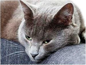 Симптомы и лечение глистов у кошек