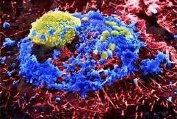 Ученые научились «программировать» белки на уничтожение вирусов гриппа