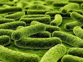 Британцы нашли причину особой опасности «русского» туберкулеза
