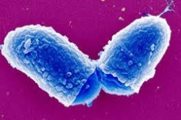 Этиология, эпидемиология и патогенез столбняка